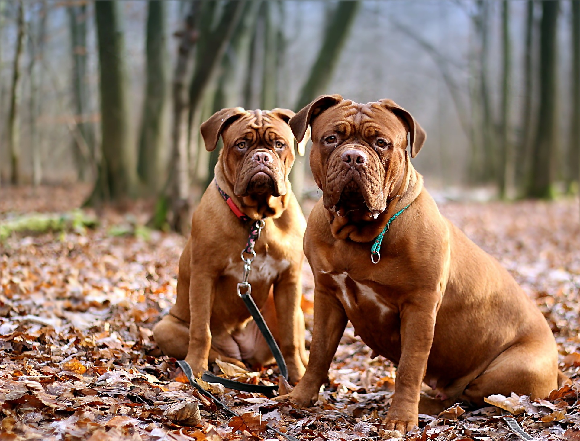 kastrace psi