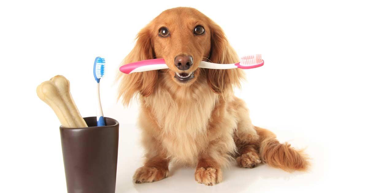 zubní prevence