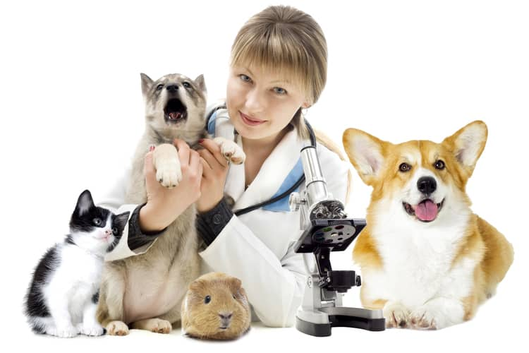 AXA veterinární klinika