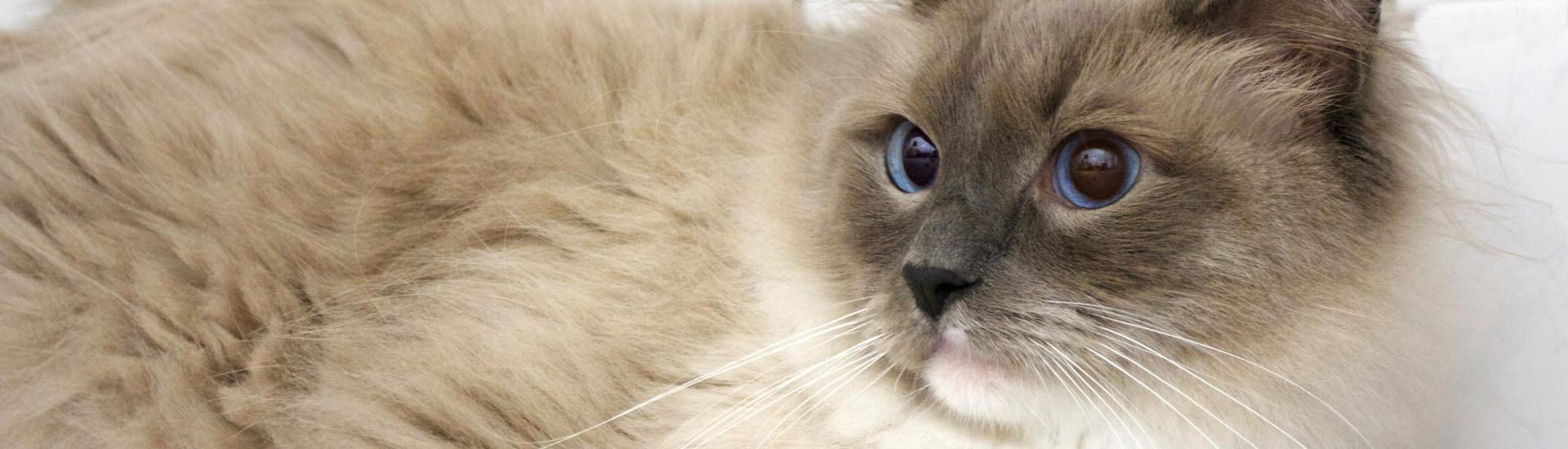 Jsme klinika přátelská ke kočkám!
